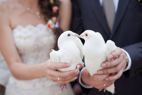 golubi-na-svadbe-01
